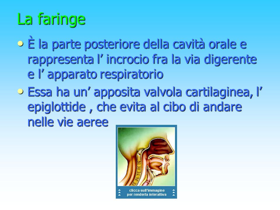 La faringe È la parte posteriore della cavità orale e rappresenta l' incrocio fra la via digerente e l' apparato respiratorio.