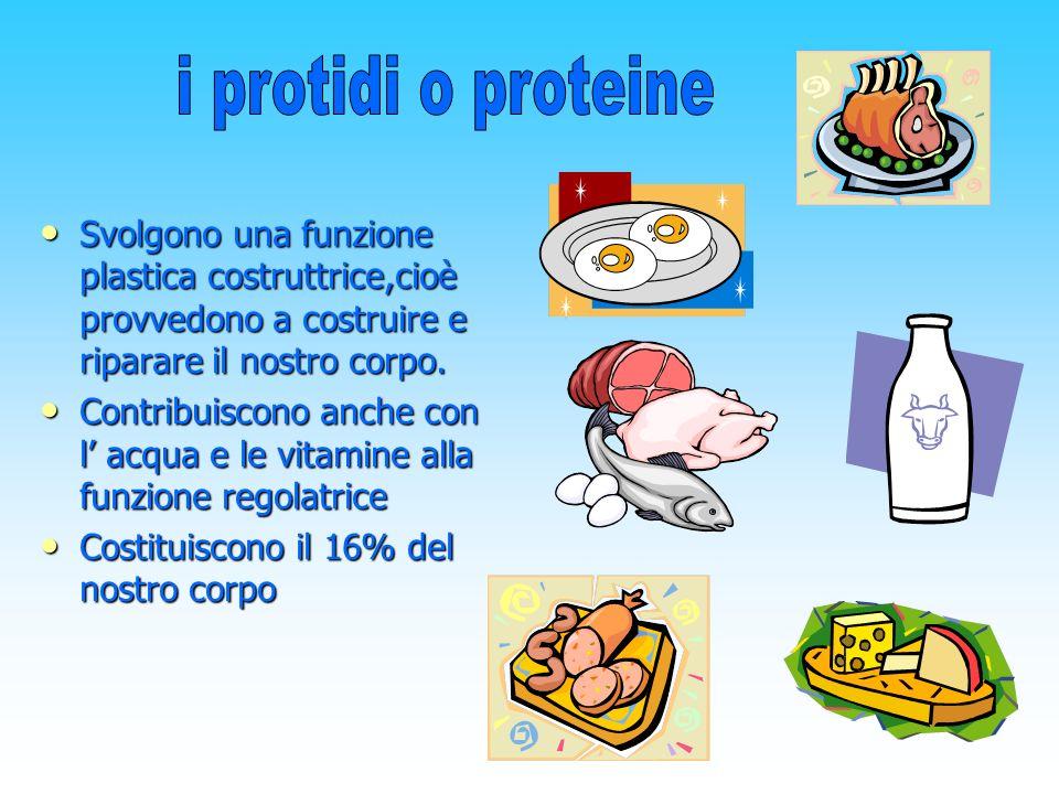 i protidi o proteine Svolgono una funzione plastica costruttrice,cioè provvedono a costruire e riparare il nostro corpo.
