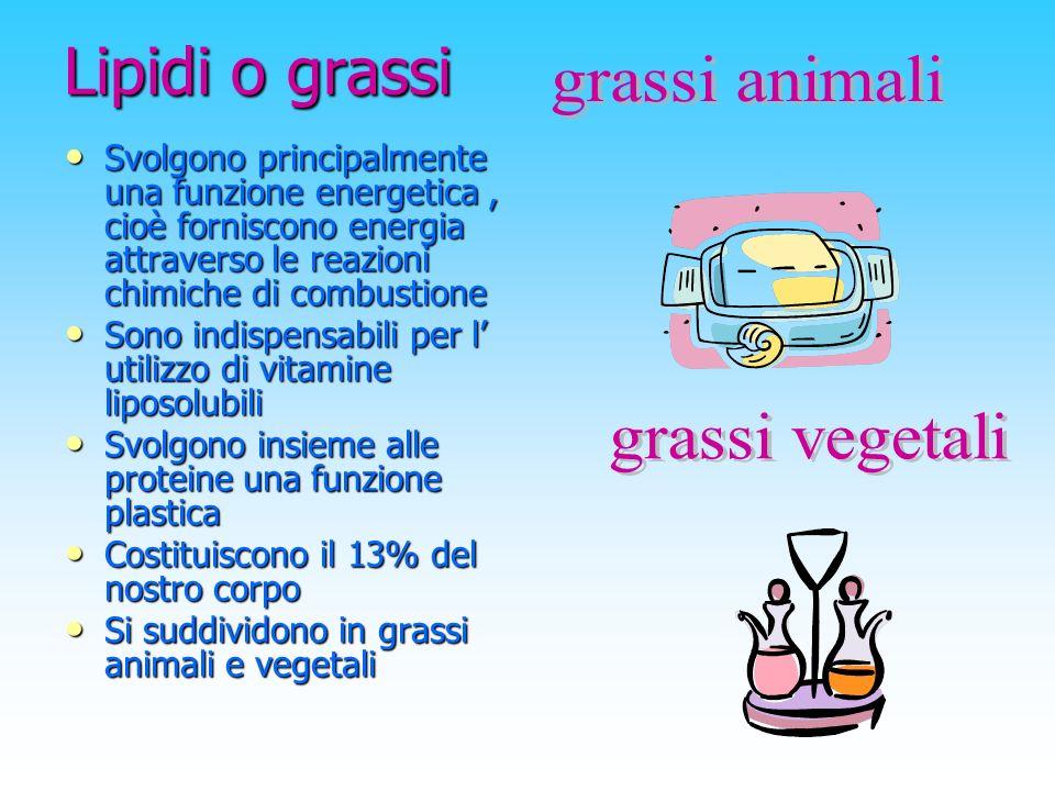 Lipidi o grassi grassi animali grassi vegetali