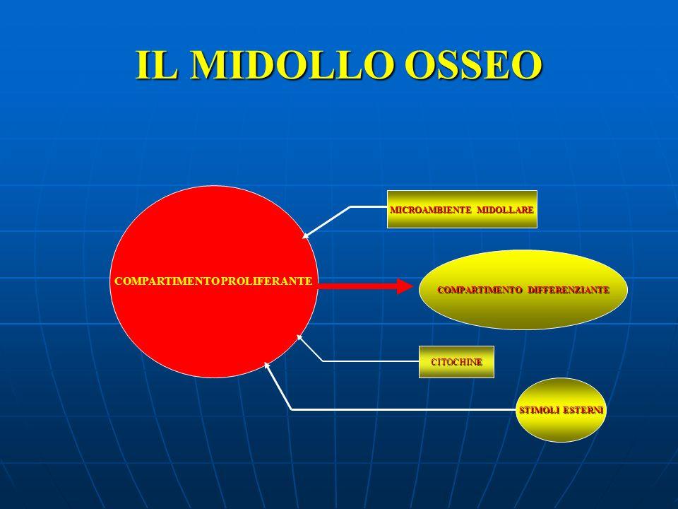 IL MIDOLLO OSSEO COMPARTIMENTO PROLIFERANTE MICROAMBIENTE MIDOLLARE