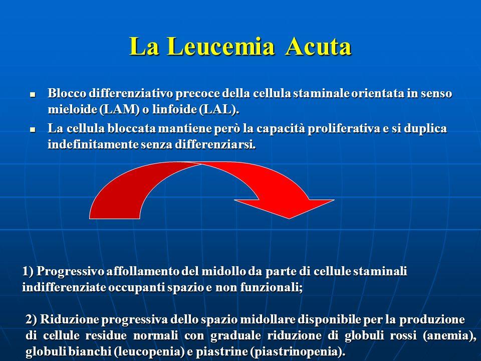 La Leucemia AcutaBlocco differenziativo precoce della cellula staminale orientata in senso mieloide (LAM) o linfoide (LAL).
