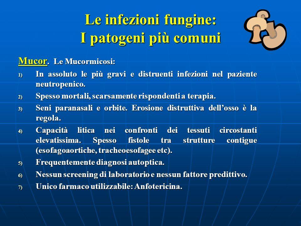 Le infezioni fungine: I patogeni più comuni