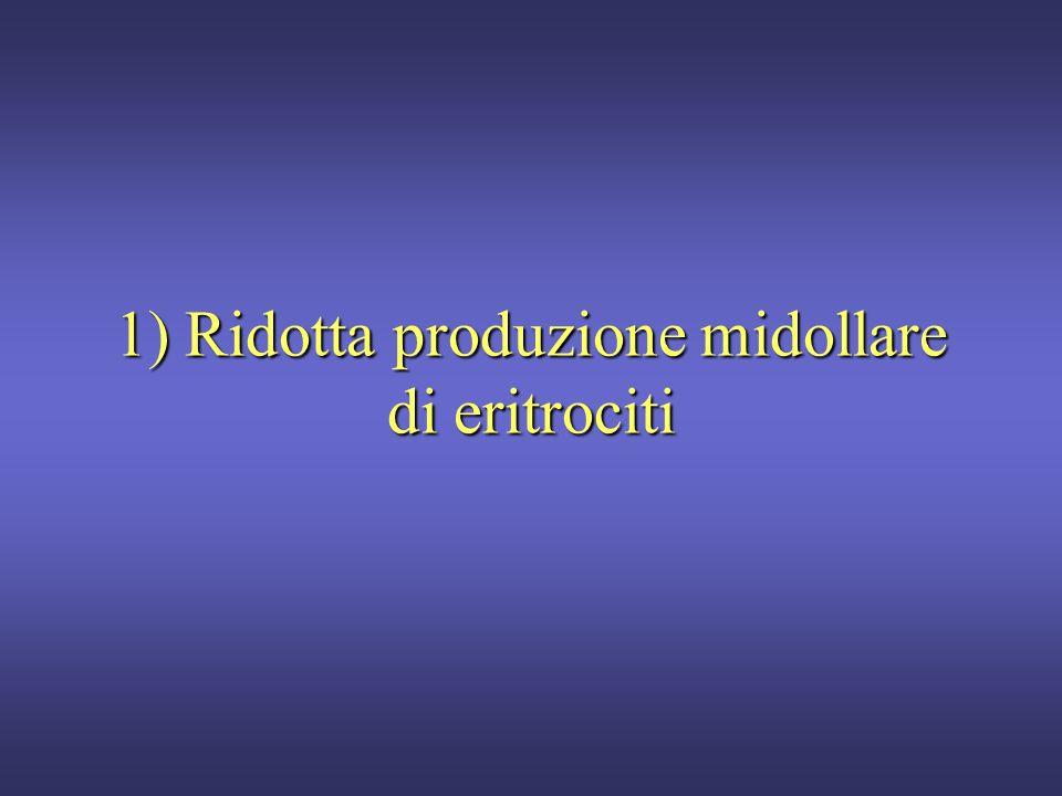 1) Ridotta produzione midollare di eritrociti