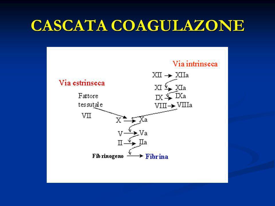 CASCATA COAGULAZONE
