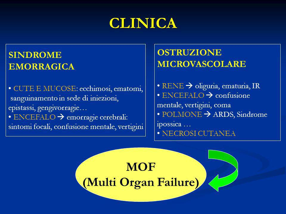 CLINICA MOF (Multi Organ Failure) OSTRUZIONE SINDROME MICROVASCOLARE