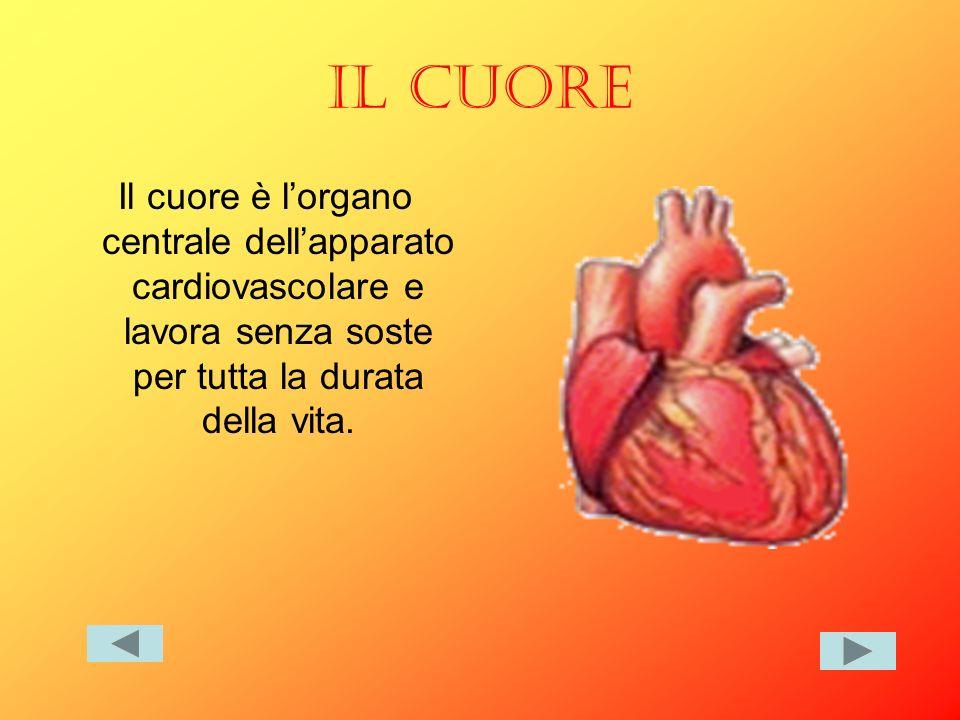 IL CUORE Il cuore è l'organo centrale dell'apparato cardiovascolare e lavora senza soste per tutta la durata della vita.