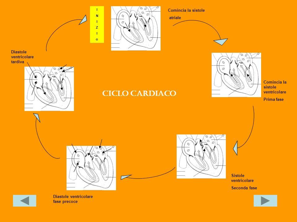 Ciclo cardiaco Comincia la sistole atriale