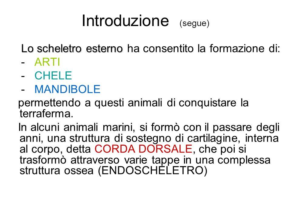Introduzione (segue) Lo scheletro esterno ha consentito la formazione di: - ARTI. - CHELE. - MANDIBOLE.