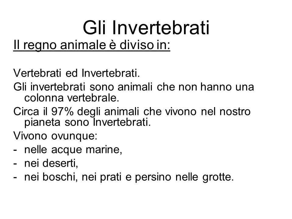 Gli Invertebrati Il regno animale è diviso in: