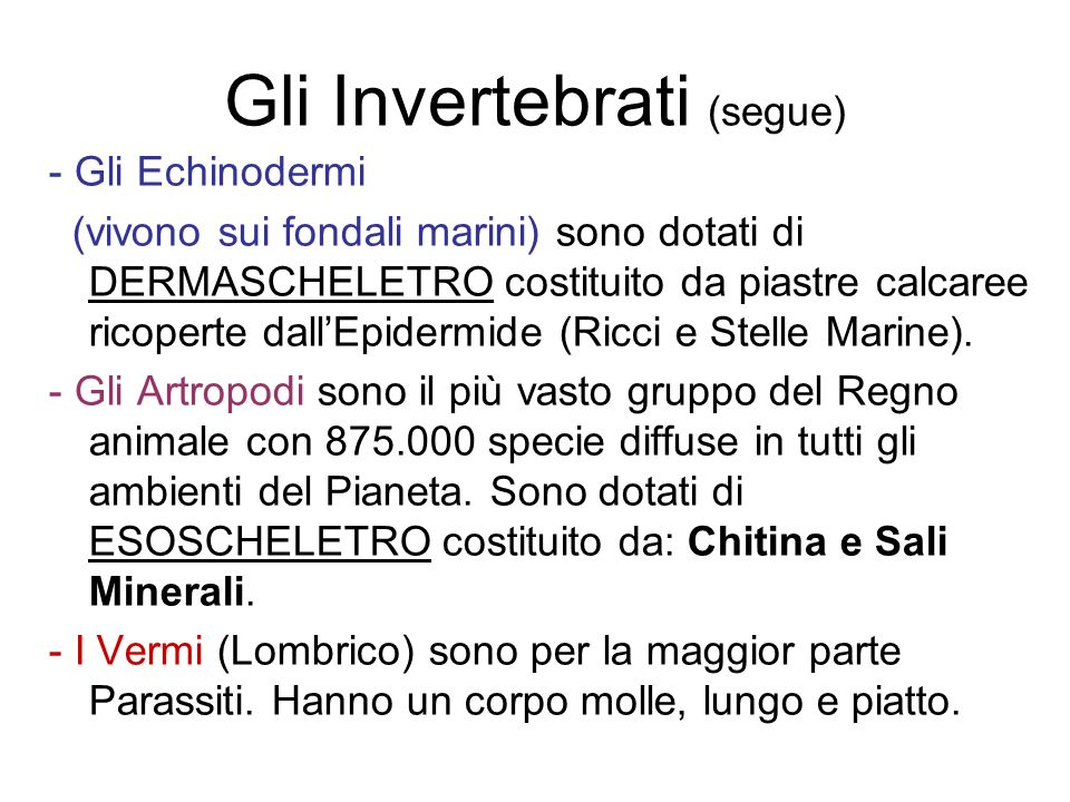 Gli Invertebrati (segue)