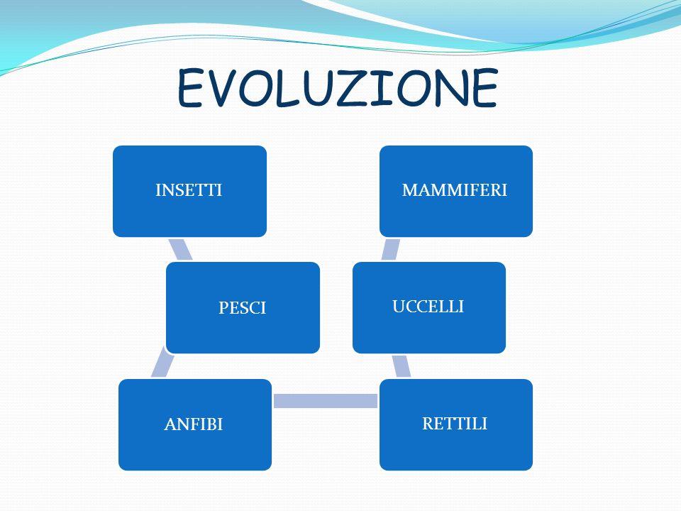 EVOLUZIONE INSETTI PESCI ANFIBI RETTILI UCCELLI MAMMIFERI