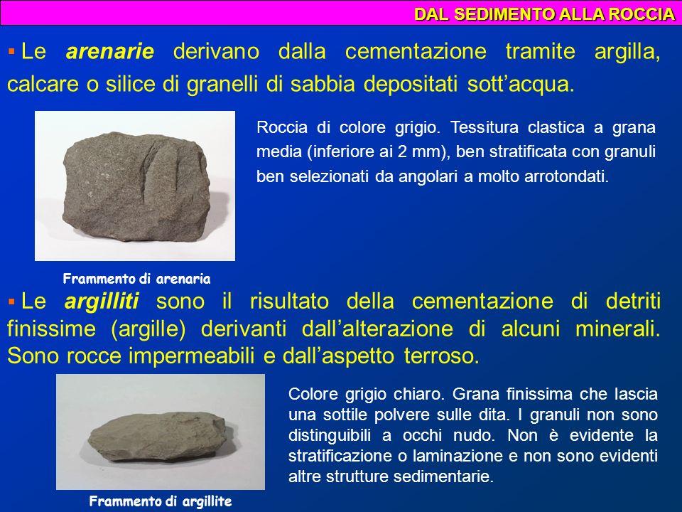 Frammento di argillite