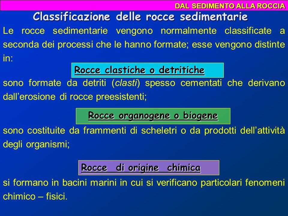 Classificazione delle rocce sedimentarie Rocce organogene o biogene