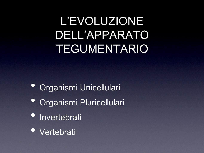 L'EVOLUZIONE DELL'APPARATO TEGUMENTARIO