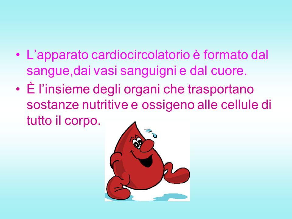 L'apparato cardiocircolatorio è formato dal sangue,dai vasi sanguigni e dal cuore.