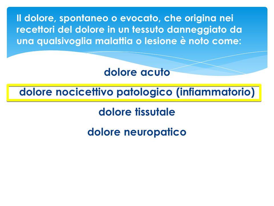 dolore nocicettivo patologico (infiammatorio)
