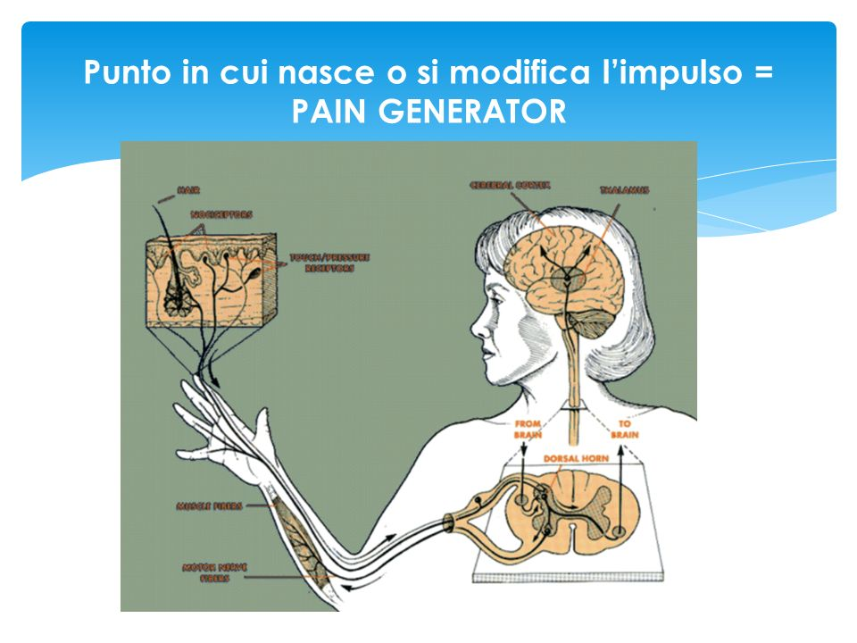 Punto in cui nasce o si modifica l'impulso = PAIN GENERATOR