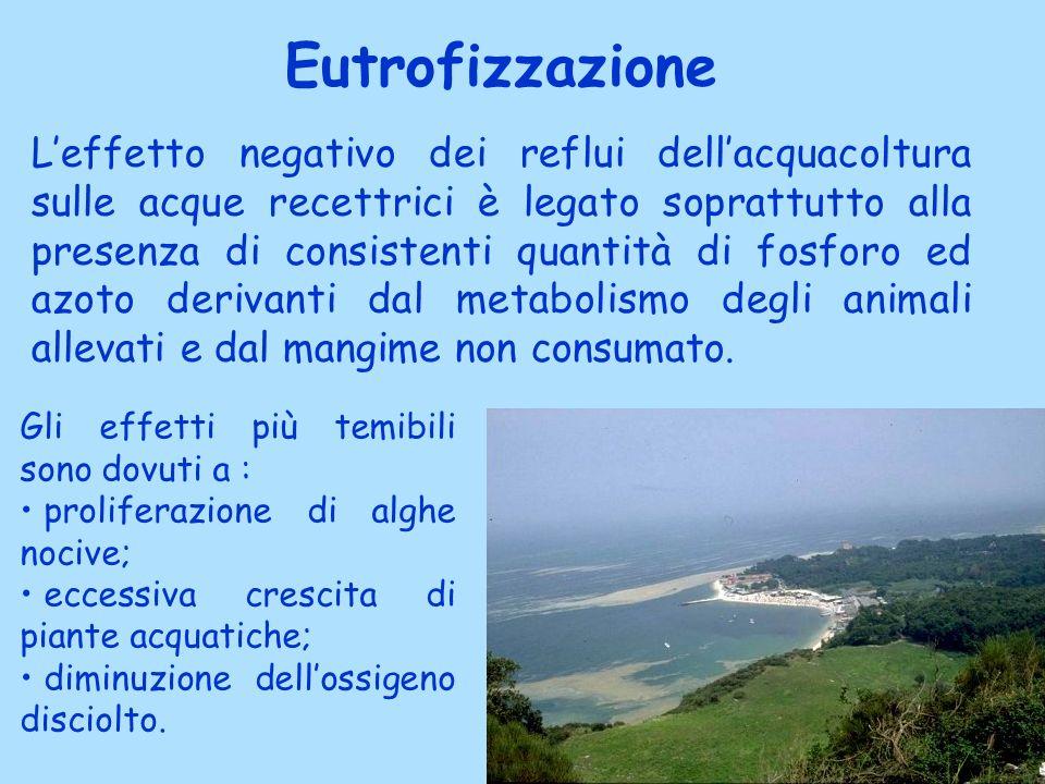 Eutrofizzazione