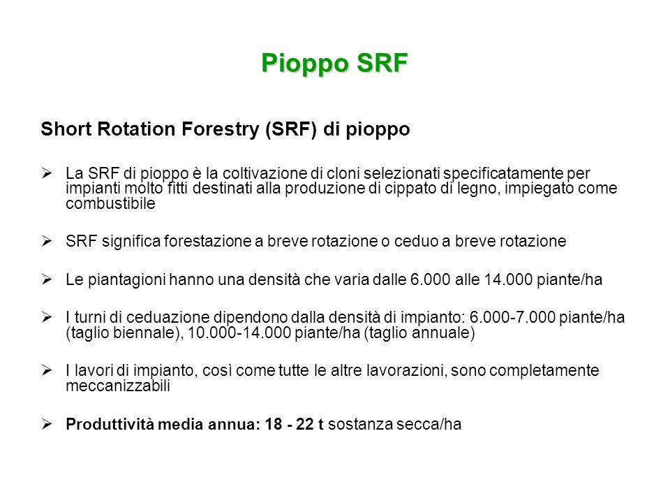 Pioppo SRF Short Rotation Forestry (SRF) di pioppo