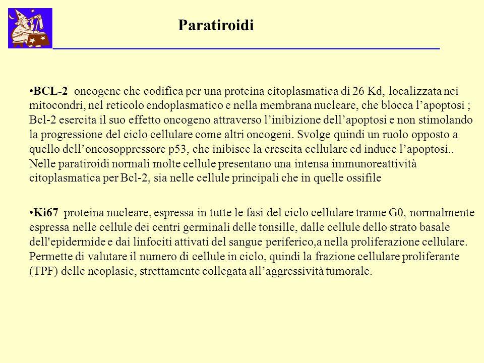 Paratiroidi