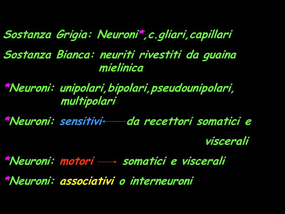Sostanza Grigia: Neuroni*,c.gliari,capillari
