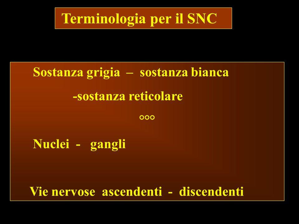 Terminologia per il SNC