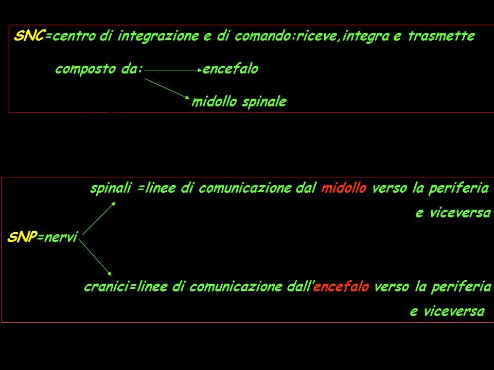 SNC=centro di integrazione e di comando:riceve,integra e trasmette