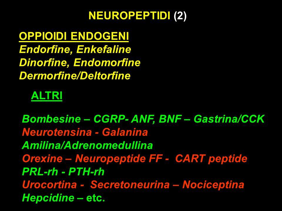 NEUROPEPTIDI (2) OPPIOIDI ENDOGENI. Endorfine, Enkefaline. Dinorfine, Endomorfine. Dermorfine/Deltorfine.