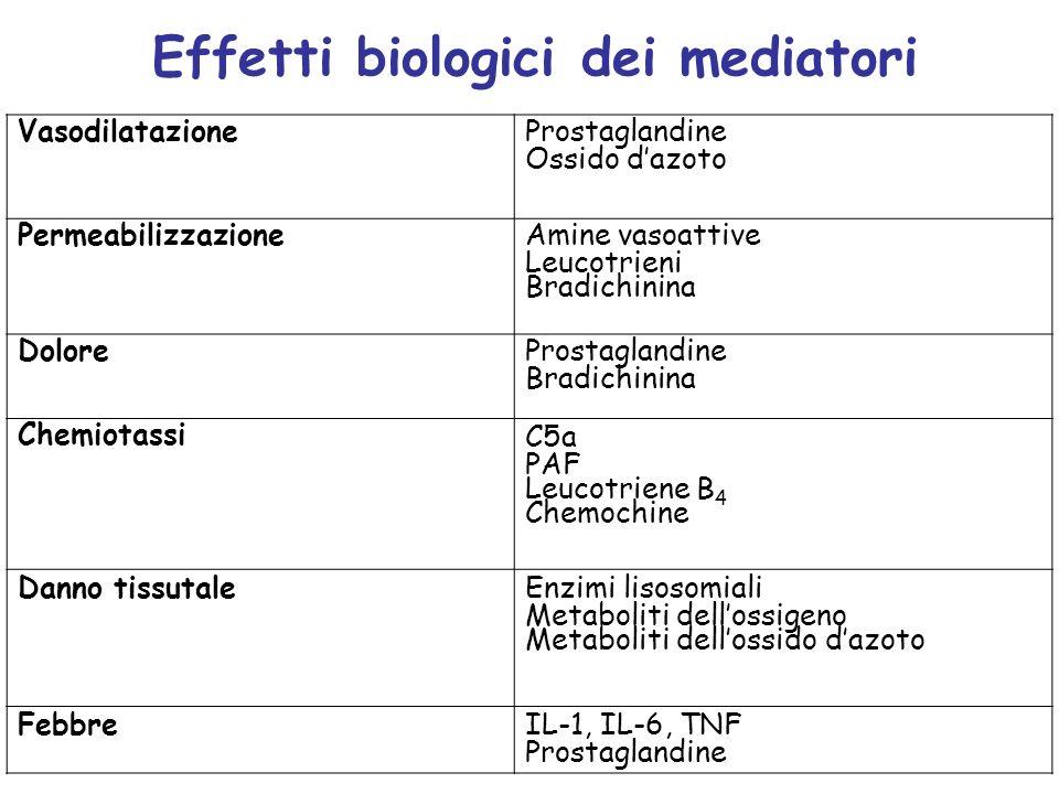 Effetti biologici dei mediatori