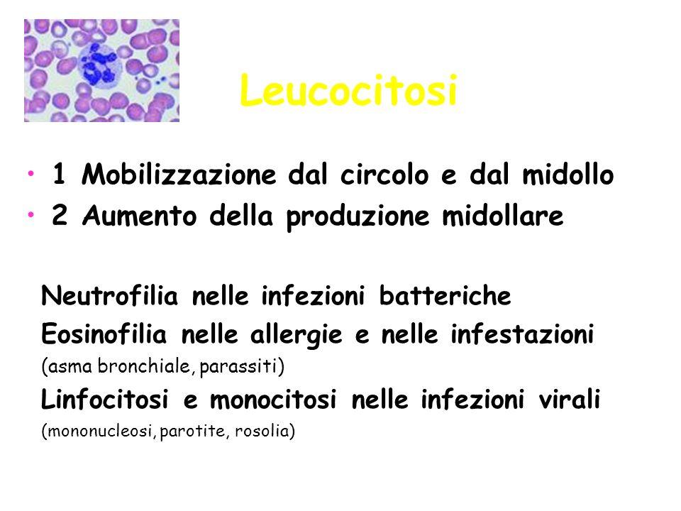 Leucocitosi 1 Mobilizzazione dal circolo e dal midollo