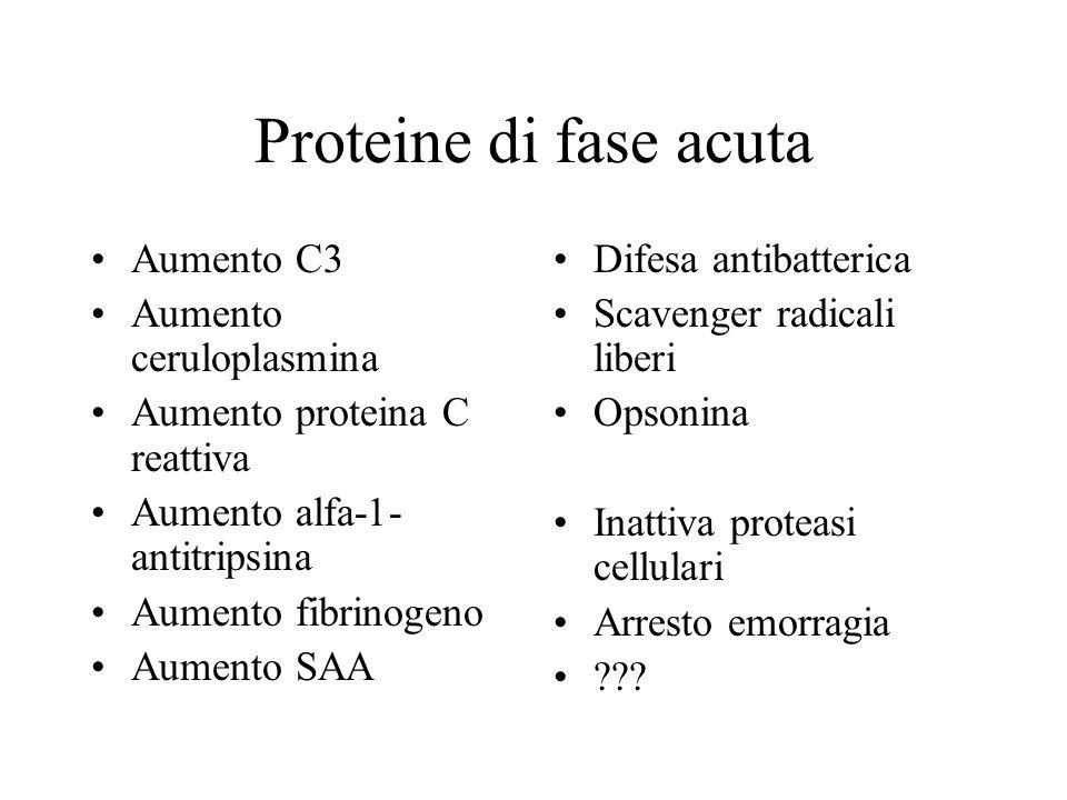 Proteine di fase acuta Aumento C3 Aumento ceruloplasmina