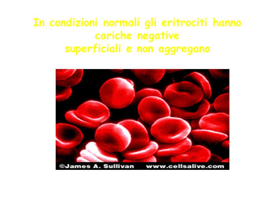 In condizioni normali gli eritrociti hanno cariche negative