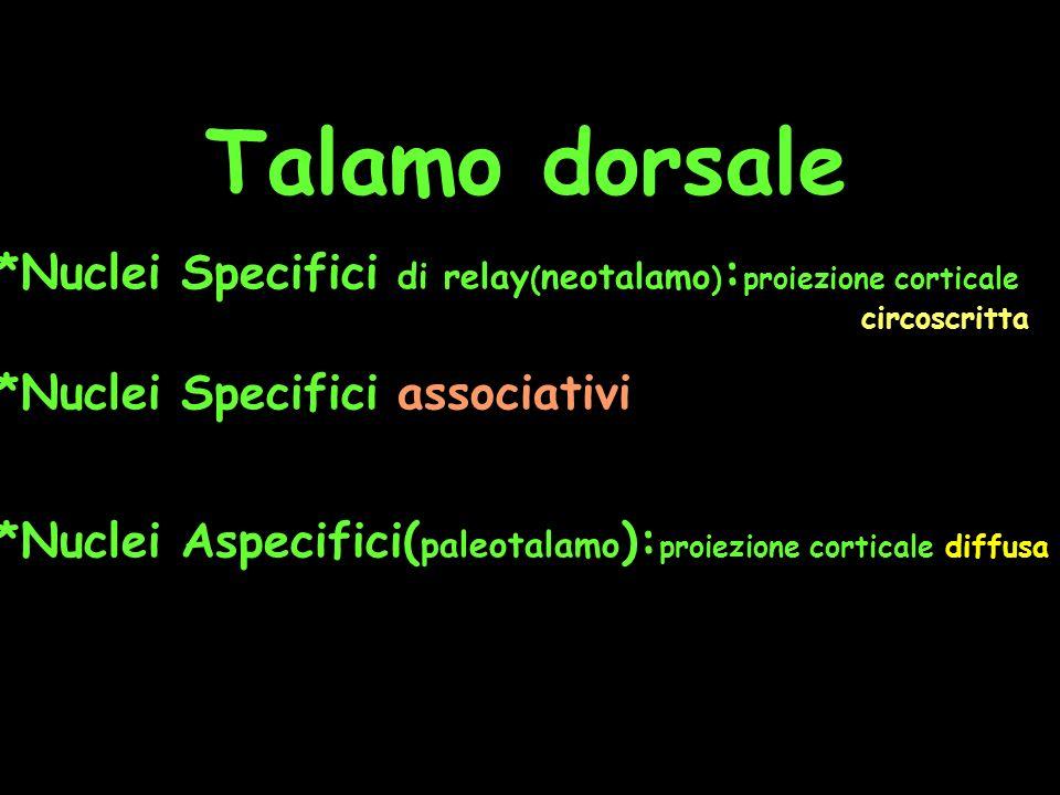 Talamo dorsale *Nuclei Specifici di relay(neotalamo):proiezione corticale circoscritta.
