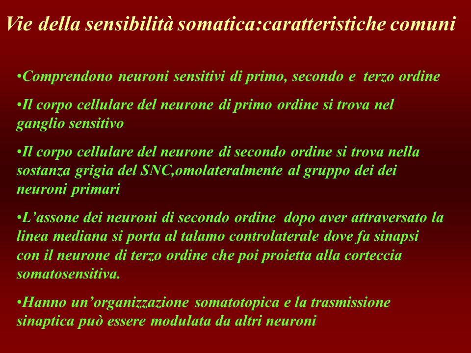 Vie della sensibilità somatica:caratteristiche comuni
