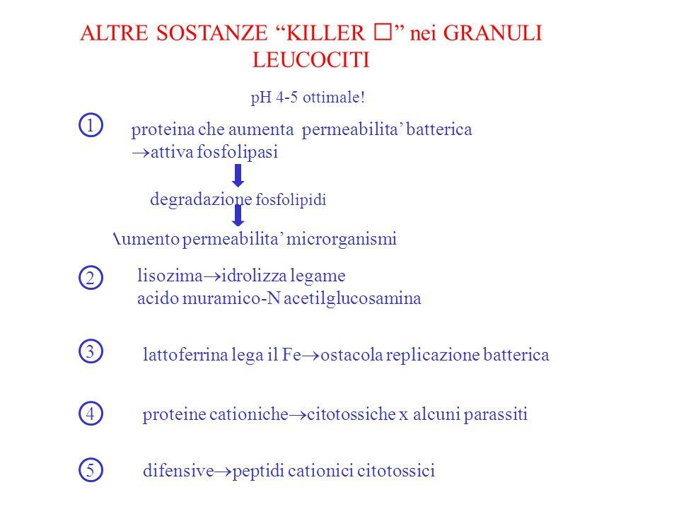 ALTRE SOSTANZE KILLER  nei GRANULI LEUCOCITI