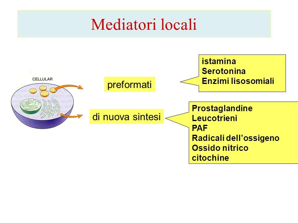 Mediatori locali preformati di nuova sintesi istamina Serotonina