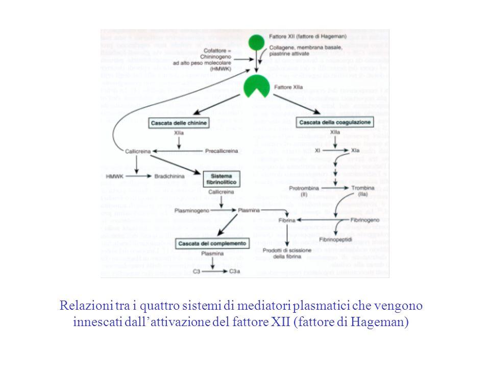 Relazioni tra i quattro sistemi di mediatori plasmatici che vengono