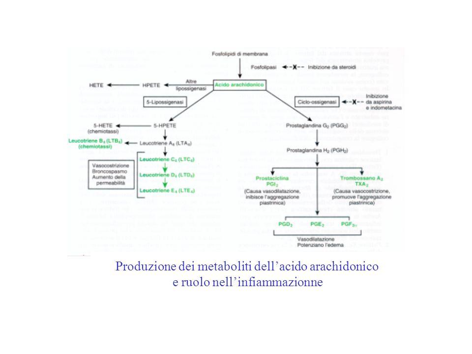 Produzione dei metaboliti dell'acido arachidonico