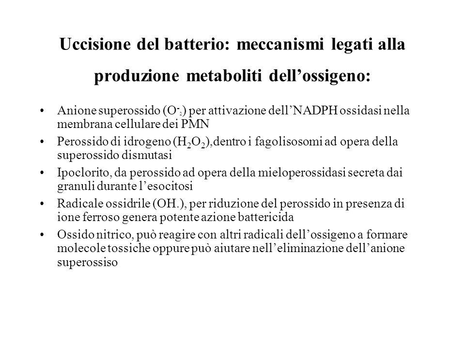 Uccisione del batterio: meccanismi legati alla produzione metaboliti dell'ossigeno: