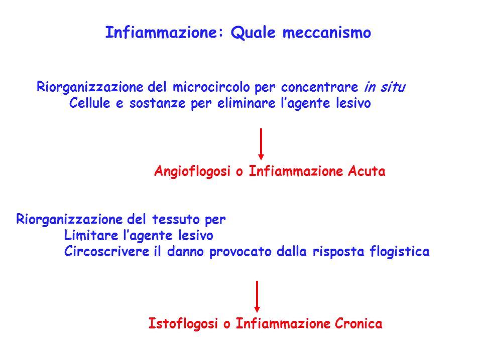 Infiammazione: Quale meccanismo