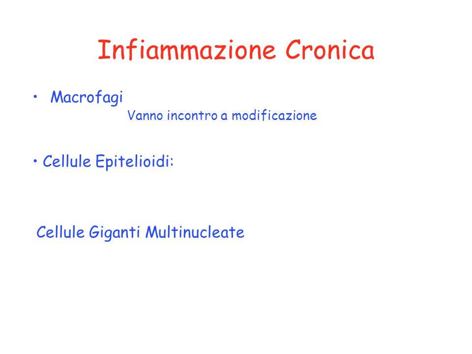Infiammazione Cronica