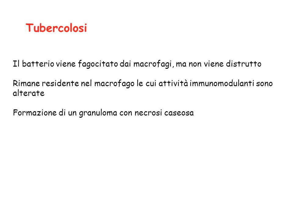Tubercolosi Il batterio viene fagocitato dai macrofagi, ma non viene distrutto.