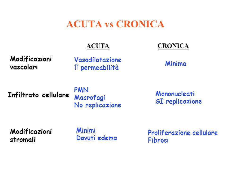 ACUTA vs CRONICA ACUTA CRONICA Modificazioni vascolari