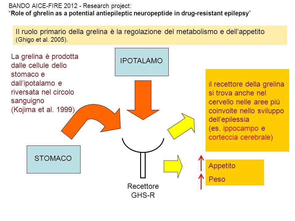 (es. ippocampo e corteccia cerebrale)