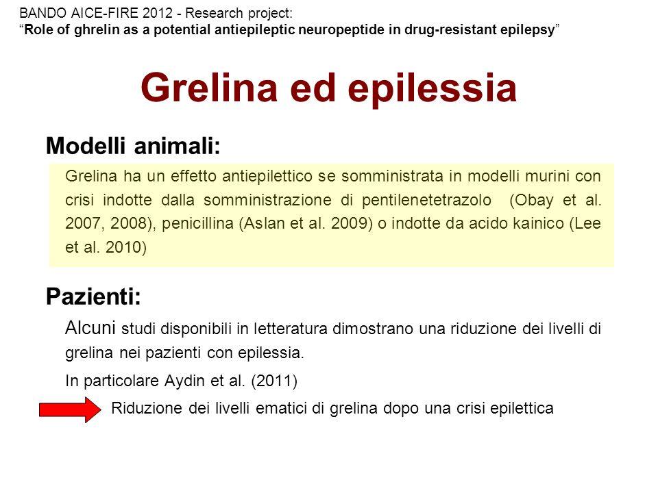 Grelina ed epilessia Modelli animali: Pazienti: