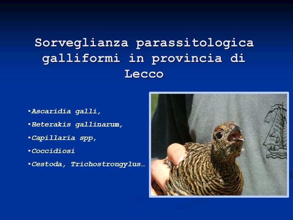 Sorveglianza parassitologica galliformi in provincia di Lecco
