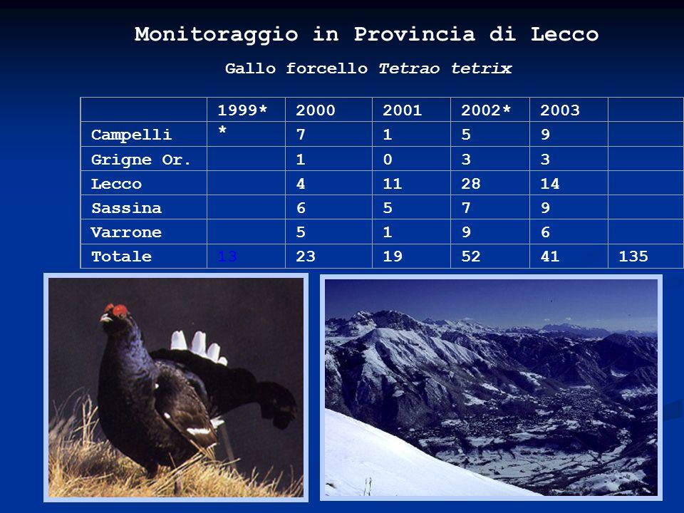 Monitoraggio in Provincia di Lecco Gallo forcello Tetrao tetrix