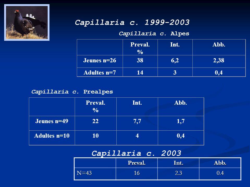 Capillaria c. 1999-2003 Capillaria c. 2003
