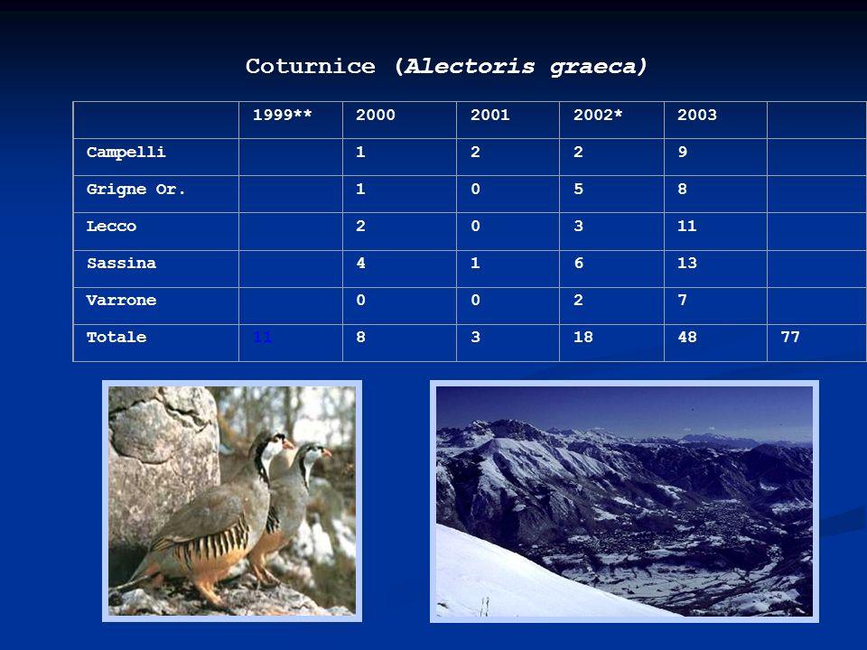 Coturnice (Alectoris graeca)