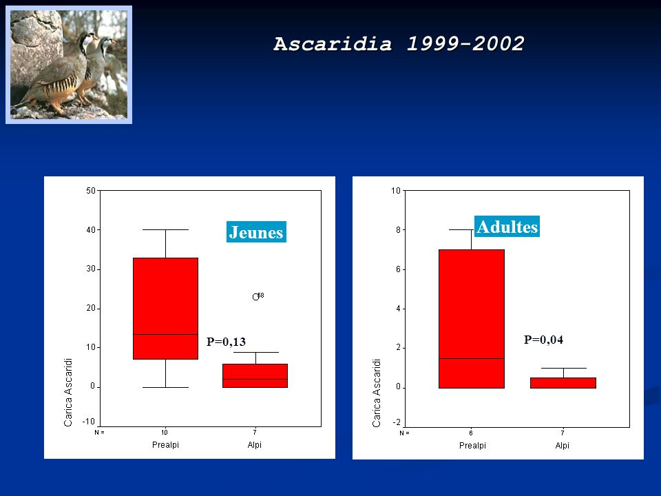 Ascaridia 1999-2002 Adultes Jeunes P=0,04 P=0,13